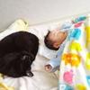 猫を飼うことが子育てに好影響な5つの理由