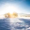 八幡高原の雪景色を撮る