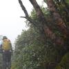 台風一過の剣山遊山 雲の道