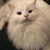 クリスマス村の補強工事:容疑者は猫ゴジラ