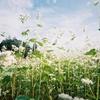Memorial photo 「秋」(FILM CAMERA)