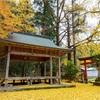 京都・小野 - 岩戸落葉神社の散り銀杏