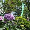 梅雨のお散歩:文京あじさいまつりの時期だけ解放される白山神社古墳へ