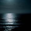 海のプランクトンを撮り続ける写真家・峯水 亮氏の息を呑むほど美しい生命の写真たち