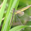 昆虫の種類を知りたい!昆虫の分類ごとの特徴や魅力と代表種を紹介