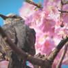 甘い蜜が好きな鳥たち