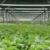 ソーラーシェアリング:ソーラーシェアリングの下の大豆栽培 - 飯塚地区の大豆は更に大きく育っています!
