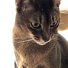【猫さんと暮らす】今日の猫さんと飼い主