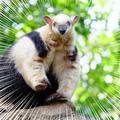 上野動物園オフと、動物園の楽しみ方と、アリクイとイカ