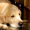 海外旅行で犬に触ってはいけない!?狂犬病の恐怖と命がけのモフりについて