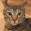 猫の毛並みと性格の特長って案外参考になる?多数の猫と接してみて感じたこと