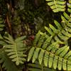 JARDIN BOTANICO シダの葉とハキリアリ