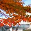 【2020.11 伊香保旅行記②】石段街で紅葉と食べ歩きを楽しむ。