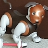 SONY aibo の COCOちゃん ~愛犬Family Dog, Real One or Robot?~