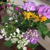 去年の紫陽花と庭の花