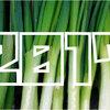 【2017年】「葱(ねぎ)収穫量」ランキング