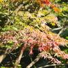 季節のお話「秋風の色は何色?」