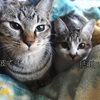 【猫の避妊手術】日帰り手術の費用はどのくらいかかる?