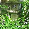 シラン(紫蘭) ドクダミ スイカズラ ツユムラサキ 6月の画像