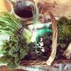 鎌倉で鎌倉野菜を育てながら暮らすことにした