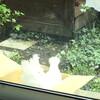 朝の大事な時間と、庭の 二羽の鳥