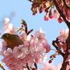 北の丸公園早春風景2017(鳥撮り…)