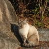 京都の嵐山・保津川沿いで出会った猫