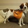登山犬用バックパック購入