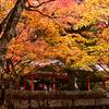 高野山紅葉真っ盛り(1)奥の院御廟橋少し手前右側