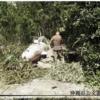 米軍にバカ爆弾とよばれた人間ロケット弾について ~ 米軍の記録写真から見る「桜花」