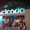 Cicada Market(シカダマーケット)〜ホアヒンのナイトマーケットはこちらがオススメ!!〜