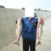 鮭釣りと釣れる天気/  今日の紋別流氷