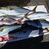 8月28日(金)釣行記 串本大島沖 アンカーカセ