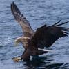 2019年3月2日の鳥撮り(1/2)-羅臼近海