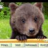 クマがいっぱい!北海道だけじゃない、全国には7か所クマ牧場があるよ