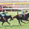 2021年 第24回(82回)優駿牝馬(オークス)(GⅠ)東京競馬場 芝2400m    消去法データ