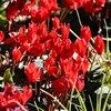 赤い花は怒りの炎
