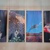 写真家の岩合光昭さんをマイダンジョンカードで読み解く