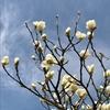ざわつく春