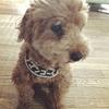 犬用名札とたたら組立の陶芸作業記録