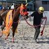 名古屋競馬 第27回東海クイーンカップ(3歳牝) ニジイロ 岡部誠騎手
