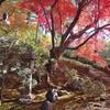 【非密の紅葉狩り2】廬山寺と金戒光明寺栄摂院【GoToアローン】