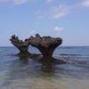 【旅行記】3月の沖縄、3日目の正直と絶景古宇利島