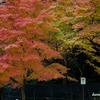 長崎の旅 1 紅葉撮影の巻