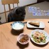 『食卓にはとりあえず座るニャン』