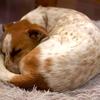 犬の寝方。寝る形。