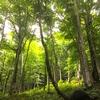 「森」という曖昧なもの