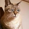 猫飼いの憂鬱