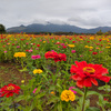 2021.10 山中湖花の都公園