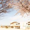 【今年の桜】数年ぶりに撮影